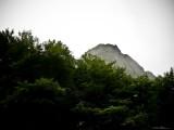 Verde y Niebla