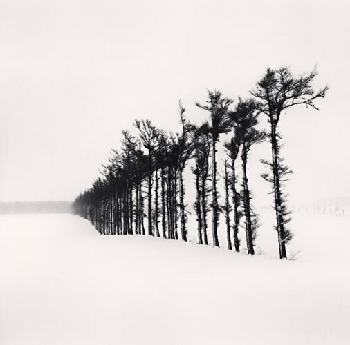 Tree Line, Hamakoshimizu, Hokkaido, Japan, 2007