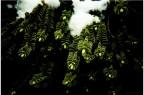 Green Simetrics
