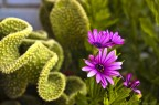 cactus y dimorfoteca
