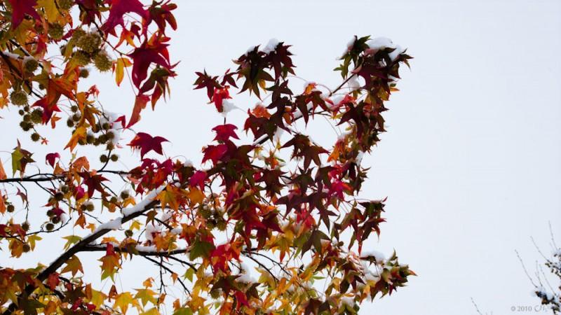 otoño-fin-1