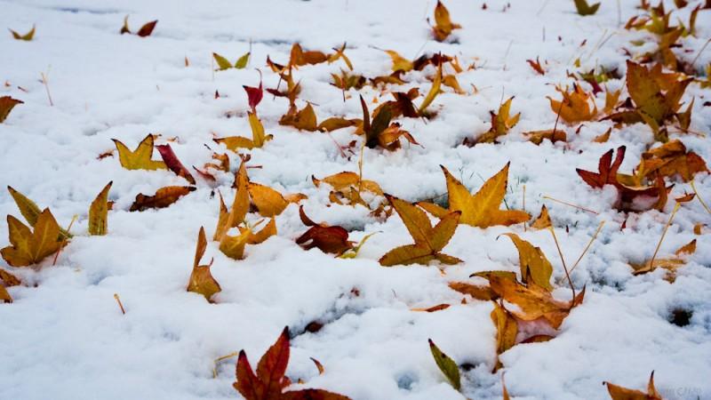 otoño-fin-2