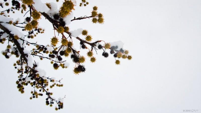 otoño-fin-3